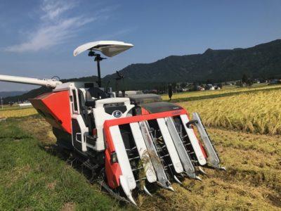稲刈りが始まりました