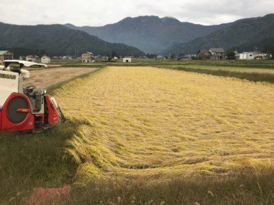 稲刈りが終了しました